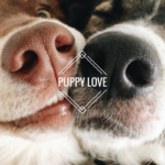 JINCE's playlist, [Puppy Love], brings 20+ delicious new tunes to your ears